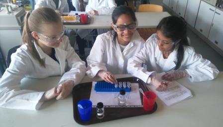 """MINT-Workshop Klasse 7 """"Blut"""""""